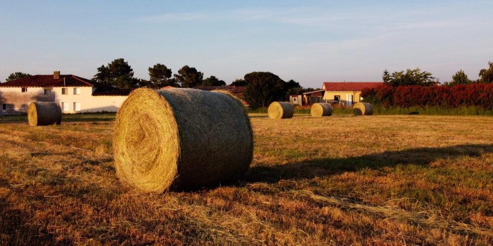 Dégrèvement pour pertes agricoles : les parcelles concernées